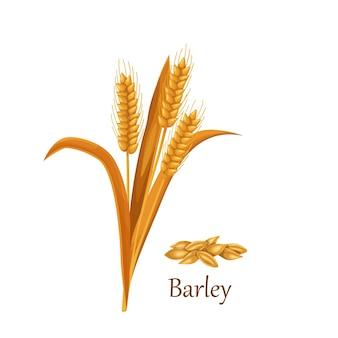 Culturas de cereais de grama de cevada, pilha de sementes de grãos de cevada.