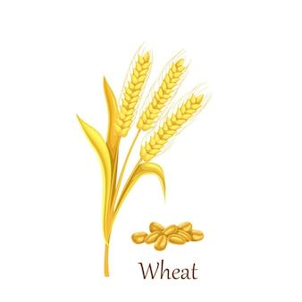 Culturas de cereais de grama de trigo, planta agrícola