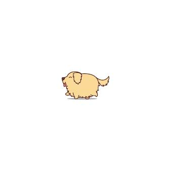 Cute, gordo, retriever dourado, cão, andar, caricatura, ícone