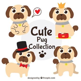 Cute pugs com estilo divertido
