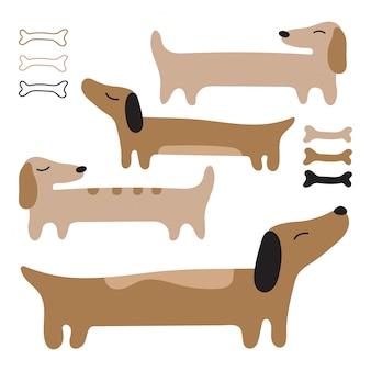 Dachshund lindo cão. cães vermelhos longos.