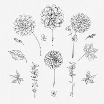 Dália desenhada à mão realista e flores silvestres em uma coleção de estilo retro vintage