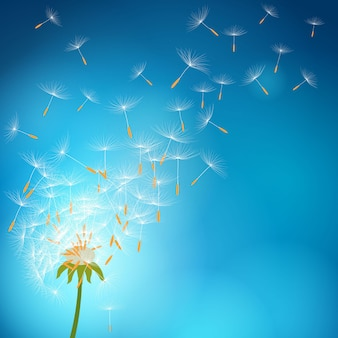 Dandelion exagerado com sementes voando com o vento