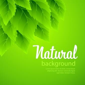 De fundo vector natural com folhas verdes da primavera