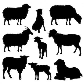 Definir coleção de silhuetas de ovelhas isolada no branco