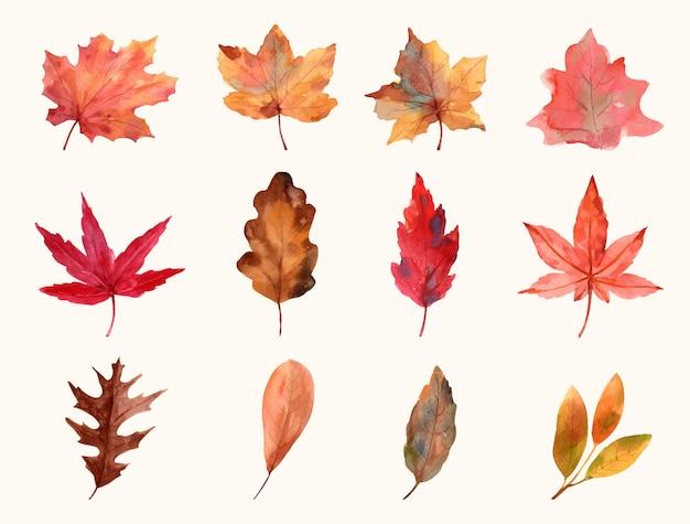 Definir folha outono