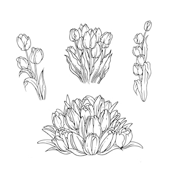Delinear o desenho do buquê de tulipas para o ornamento da natureza