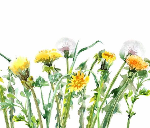 Dente-de-leão flores amarelas aquarela bouquet floral fundo floral cartão de aniversário vetor