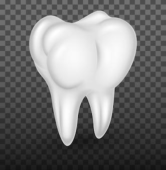 Dentes molares humanos realistas