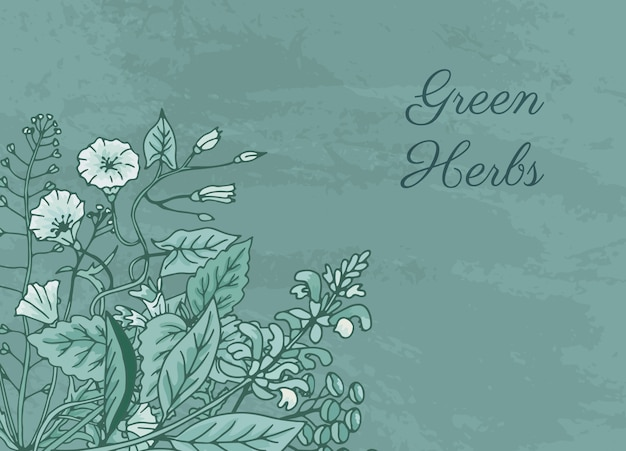 Desenhadas mão ervas medicinais