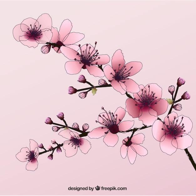 Desenhadas mão flores de cerejeira