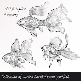 Desenhadas mão goldfishes definir
