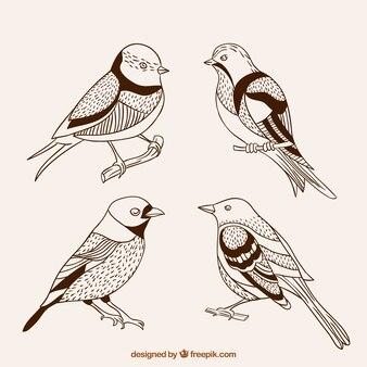 Desenhadas mão pássaros bonitos