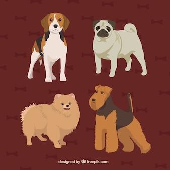 Desenhadas mão raças de cães realista