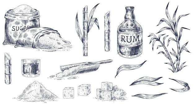 Desenhado à mão de cana-de-açúcar e rum Vetor Premium
