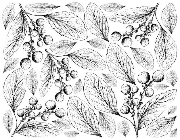 Desenhado à mão de frutas de laranjeira em fundo branco
