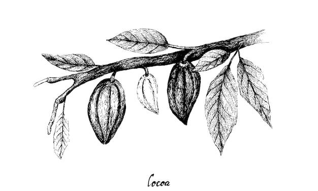 Desenhado à mão de frutos de theobroma cacau em um grupo de árvores