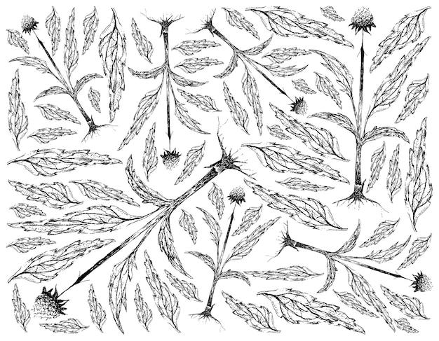 Desenhado à mão de planta echinacea ou coneflowers