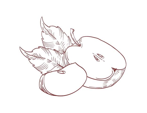 Desenhado à mão fatias realistas de maçã com folhas isoladas em branco