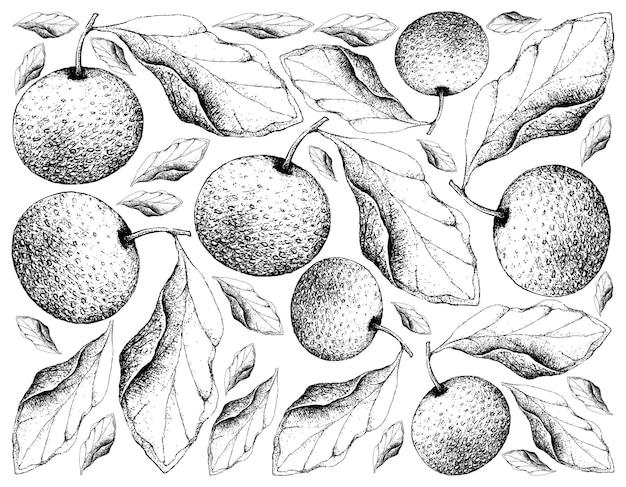 Desenhado à mão fundo de peras chinesas