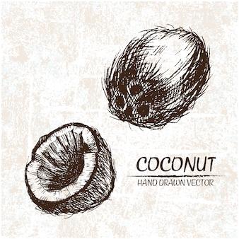 Desenhado mão cocos