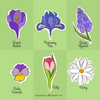 Desenhado mão variedade de flores