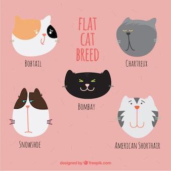 Desenho agradável da raça do gato