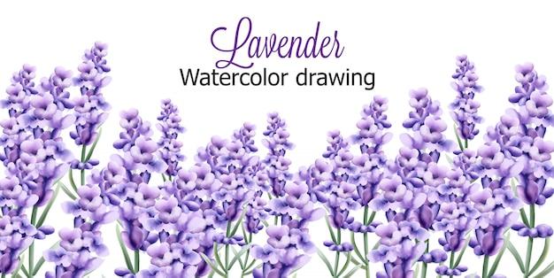 Desenho aquarela de lavanda