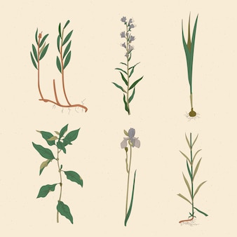 Desenho artístico de ervas e flores silvestres