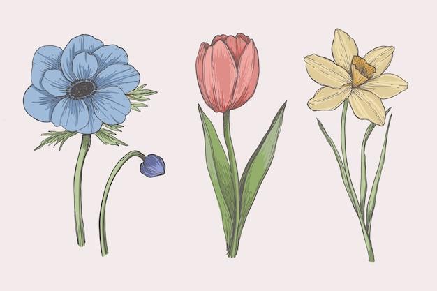 Desenho com coleção de flores de botânica vintage