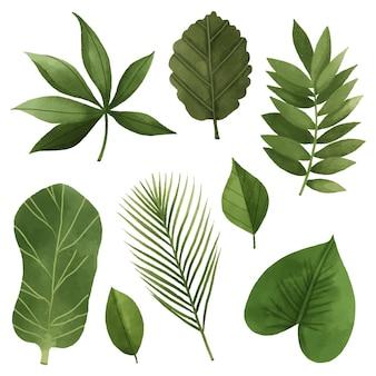 Desenho da coleção de folhas