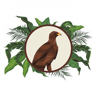 Desenho de águia selvagem