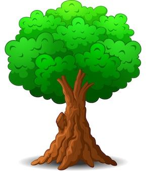 Desenho de árvore no fundo branco