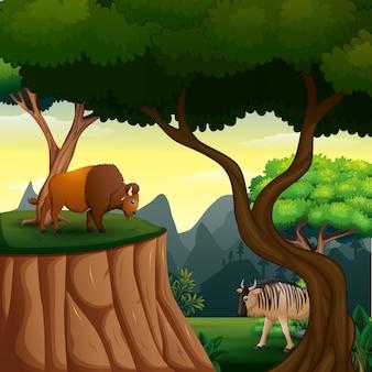 Desenho de búfalo e gnu na selva