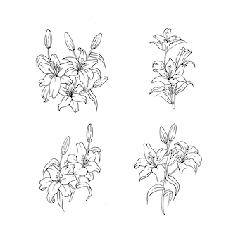 Desenho de contorno de flor de lírio para ornamento da natureza