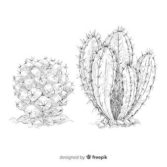 Desenho de dois cactos, ilustração em preto e branco para colorir
