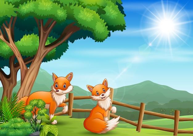 Desenho de duas raposas dentro da cerca de madeira