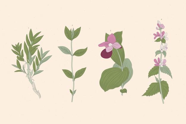 Desenho de ervas e flores silvestres