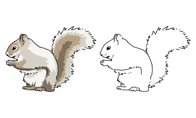 Desenho de esquilo desenhado à mão para colorir para criança