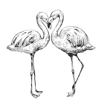 Desenho de flamingo. ilustração desenhada mão convertida em vetor. contorno com fundo transparente