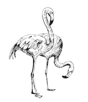 Desenho de flamingo. ilustração desenhada mão convertida em vetor. contorno com fundo transparente Vetor Premium
