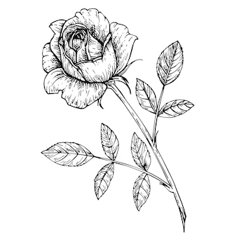 Desenho de flor rosa. flor de esboço de tinta com folhas no caule. ilustração gráfica desenhada à mão