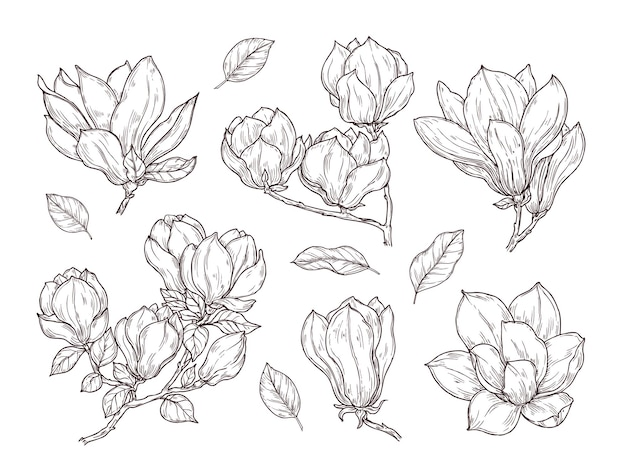 Desenho de flores de magnólia. desenho de flor de cacho botânico de primavera. planta e folhas de flor isoladas. conjunto de vetores de buquê vintage desenhado de mão. ilustração botânica floral, esboço de coleção de buquê