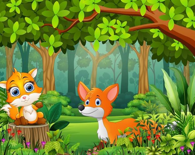Desenho de floresta de paisagem de verde na primavera com duas raposas