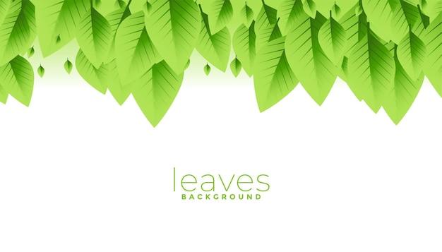 Desenho de fundo com folhas verdes