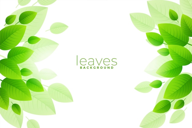 Desenho de fundo de folhas verdes salgadas
