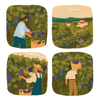 Desenho de ilustração de colheita de uvas para vinho