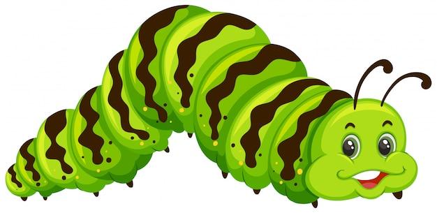 Desenho de lagarta verde bonito