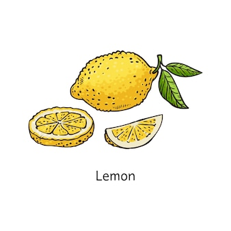Desenho de limão amarelo isolado no branco