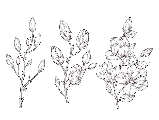 Desenho de magnólia. ramo de flor floral de arte e ramo de flores. desenho de plantas românticas de primavera, natureza, ilustração botânica gráfica. decoração botânica de ramos de magnólia